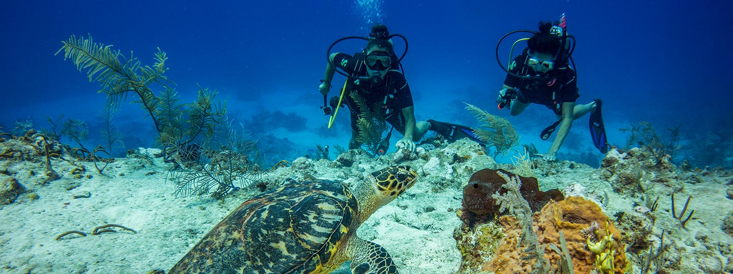 Scuba Divers And Sea Turtle At East Bay Resort South Caicos, Turks And Caicos