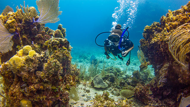Scuba Diving Next To Coral South Caicos, Turks And Caicos