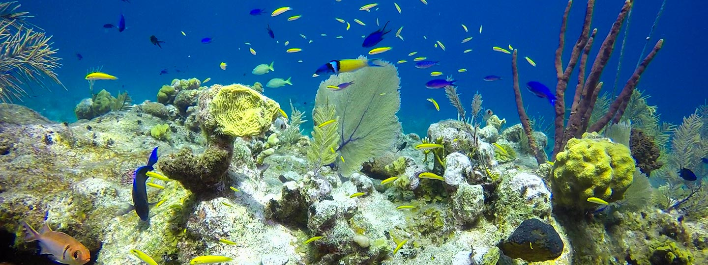 Colorful Coral And Tropical Fish - Snorkeling At East Bay Resort South Caicos, Turks And Caicos