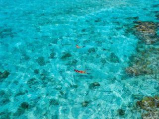 Snorkeling Excursions At East Bay Resort South Caicos Island