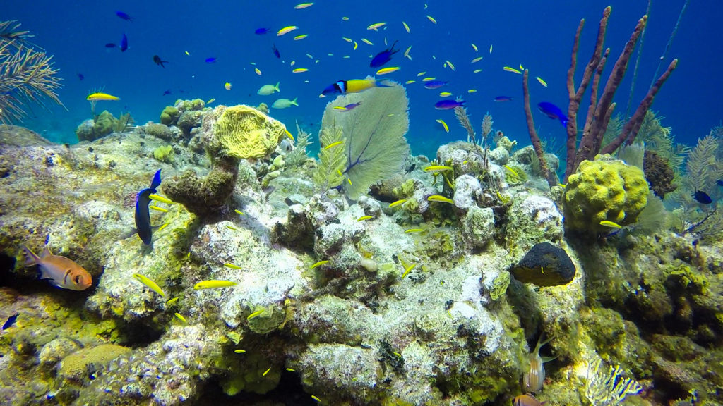Colorful Coral And Tropical Fish At East Bay Resort South Caicos Island
