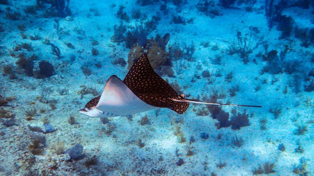 Stingray - East Bay Resort South Caicos Island