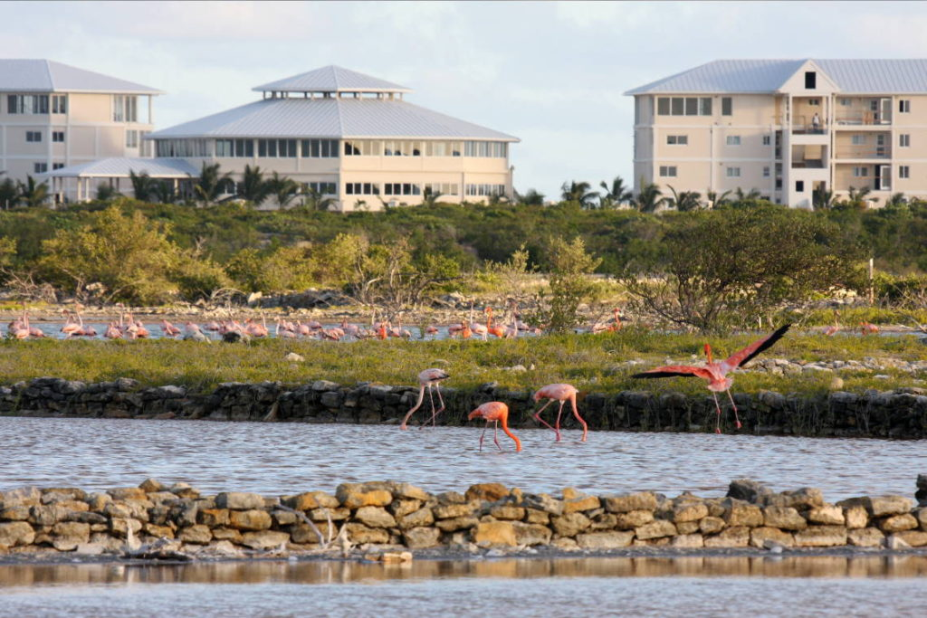 East Bay Resort And Wild Flamingos