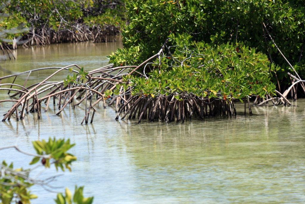 South Caicos Mangroves