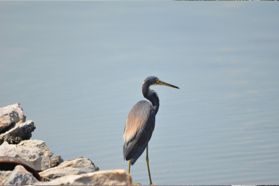 South Caicos Wildlife