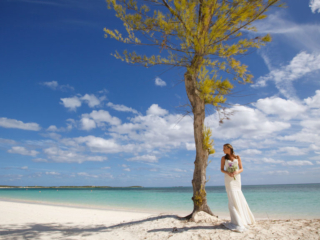 The Bride Poses By A Tree On East Bay Beach South Caicos