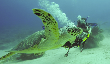 East Bay Resort Two Night Diving Package