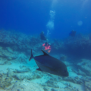 South Caicos Diving With The School For Field Studies