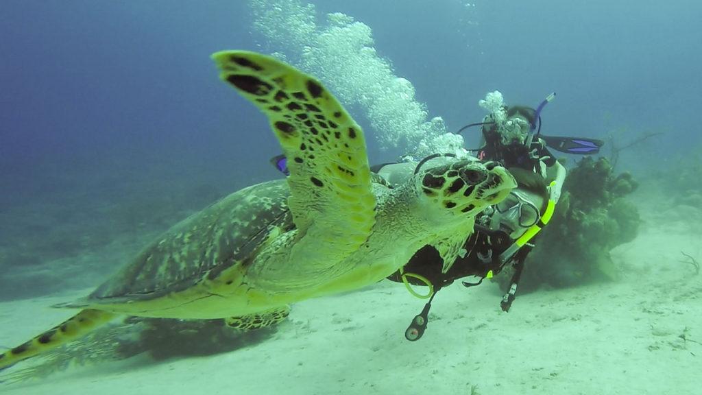 South Caicos Scuba Diving At East Bay Resort