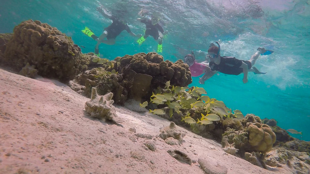 Snorkeling Excursions at East Bay Resort