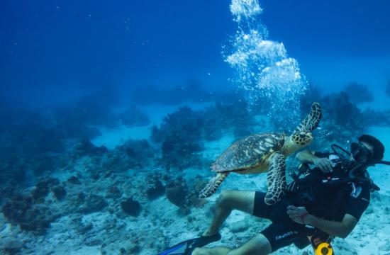 Diving South Caicos